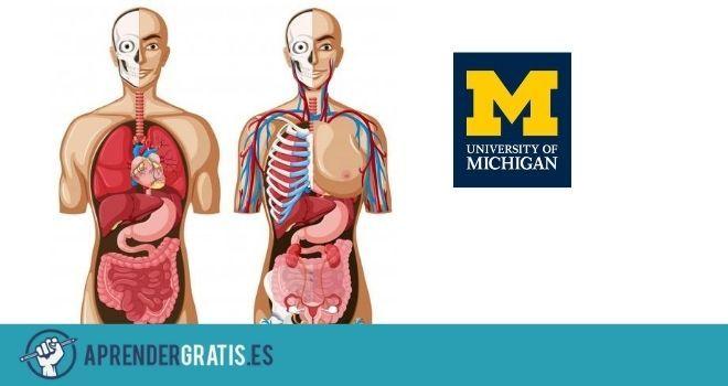 Aprender Gratis | Curso sobre el sistema gastrointestinal, reproductivo y endocrino