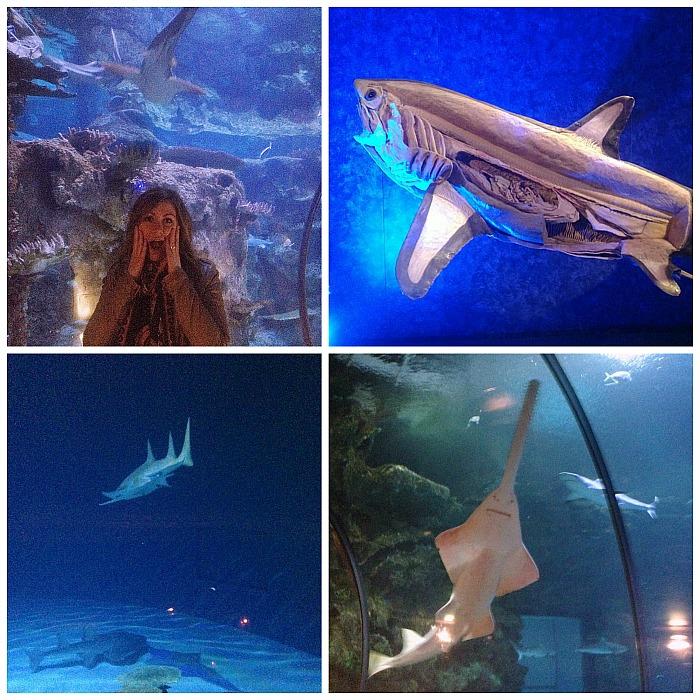 Shark Reef - Las Vegas