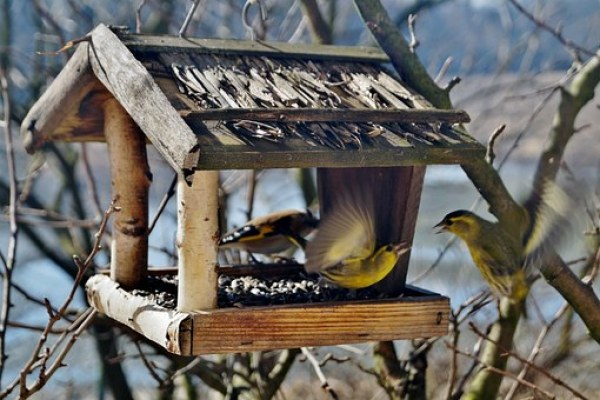 birds-664232__340