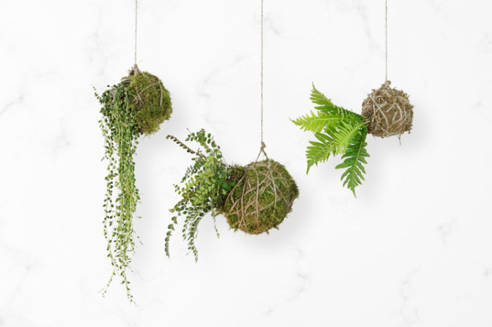 DIY Kokedama String Garden:  Guest Post by ProFlowers