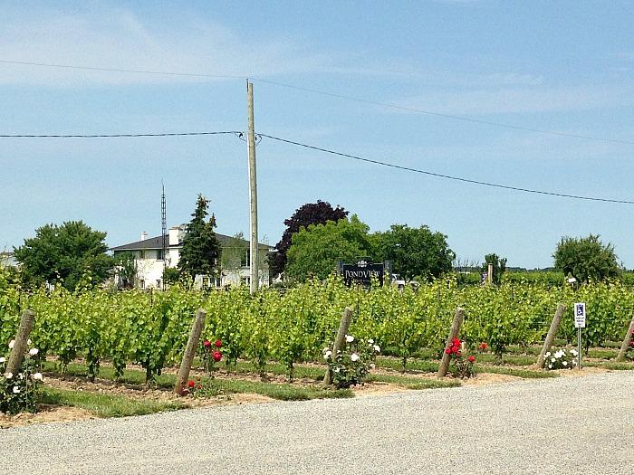 Pondview vineyard