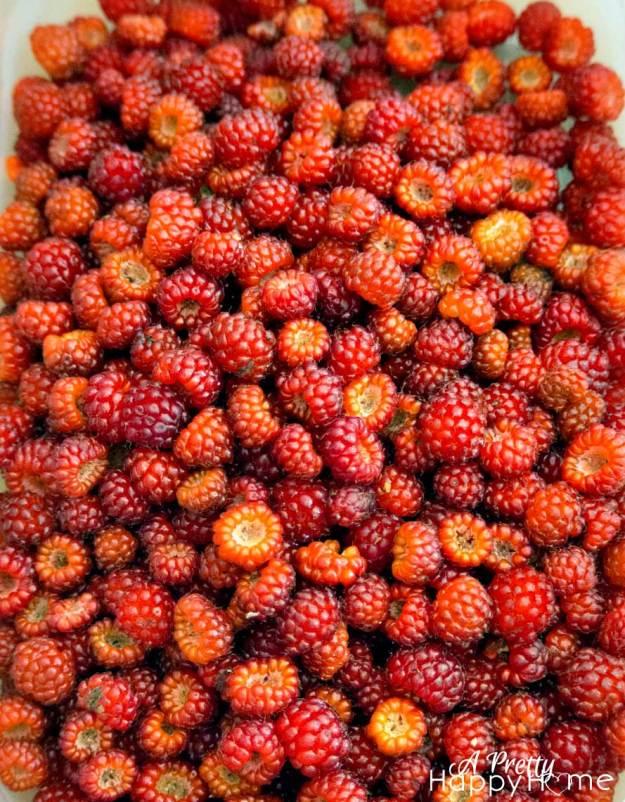 raspberryonsheet