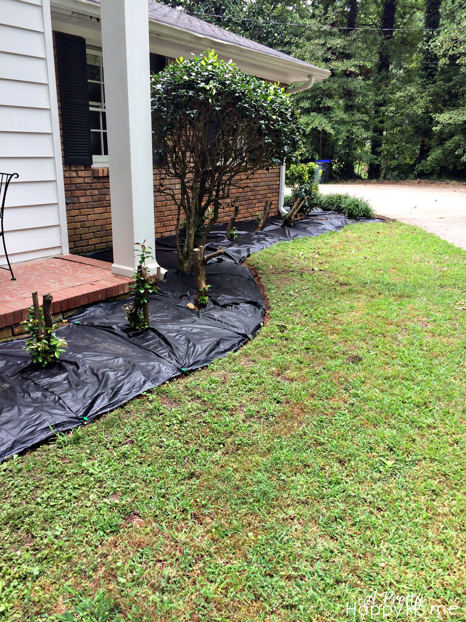 Weeds in flower beds with potato like roots - I Spent A Fair Amount Of Time Procrastinating On Pulling My Ever Growing And Out Of Hand Weeds By Researching The Pros And Cons Of Landscape Fabric