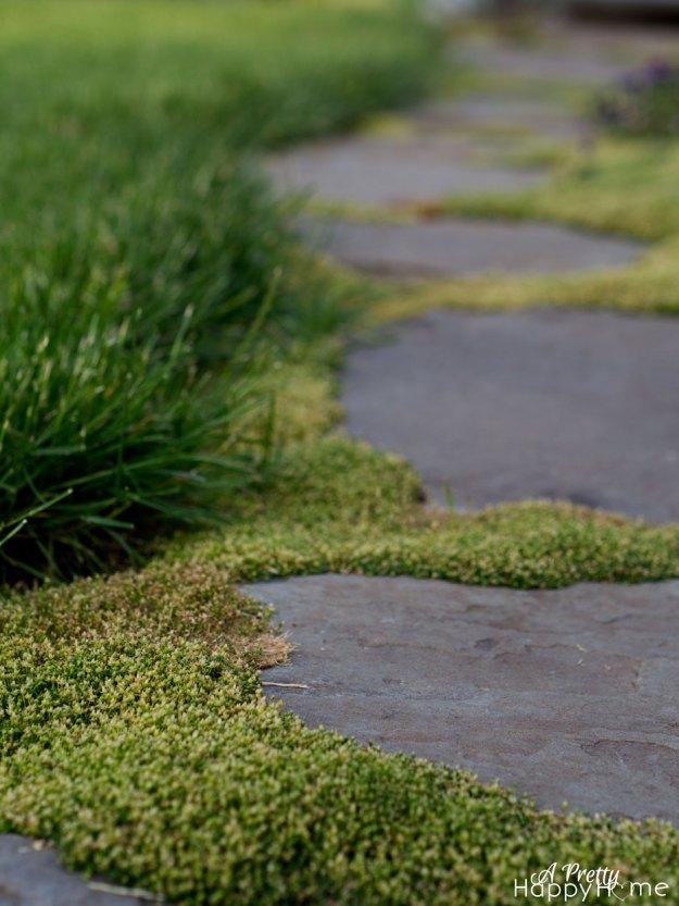 moss-steps