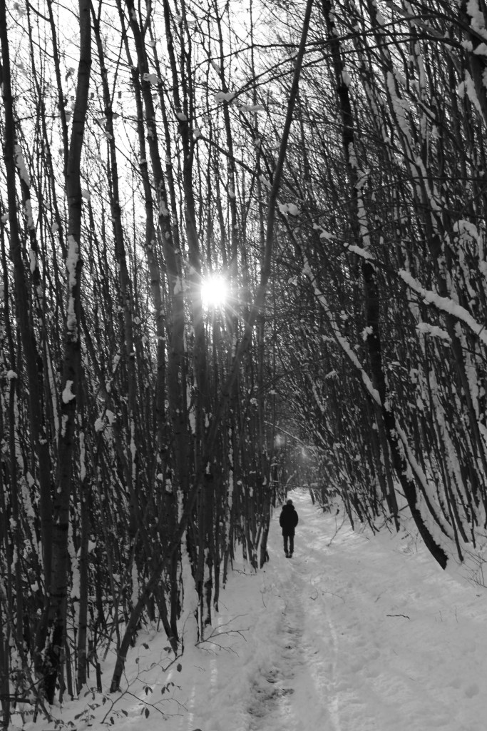 black and white woods, snowing