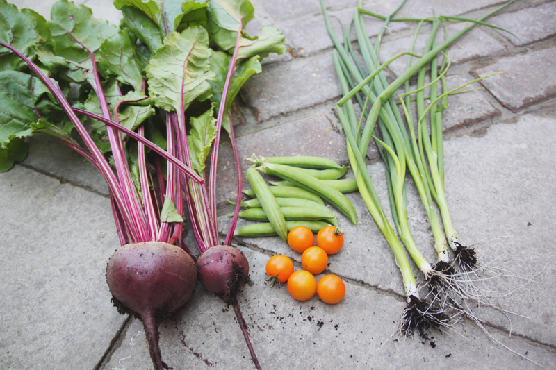 April Everyday July Harvest: Beetroot, Peas, Tomatoes & Spring Onions