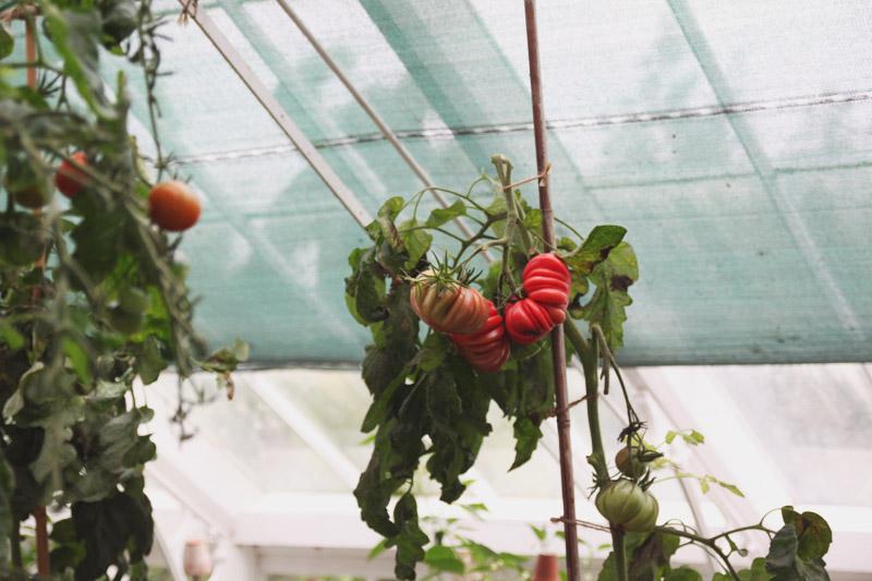 Clumber Park Walled Kitchen Garden