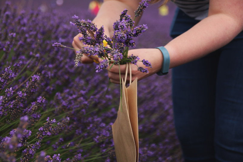 Hitchin Lavender Farm