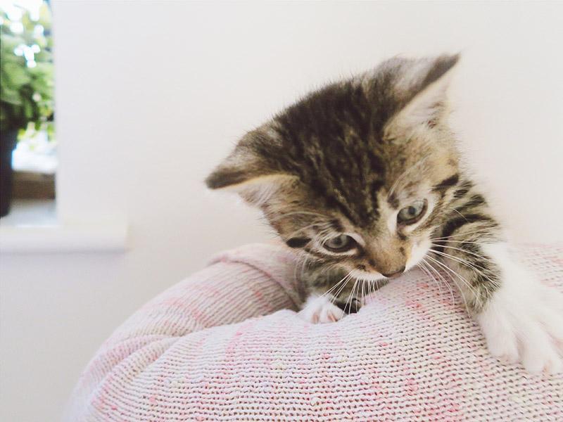 Keeko the Kitty
