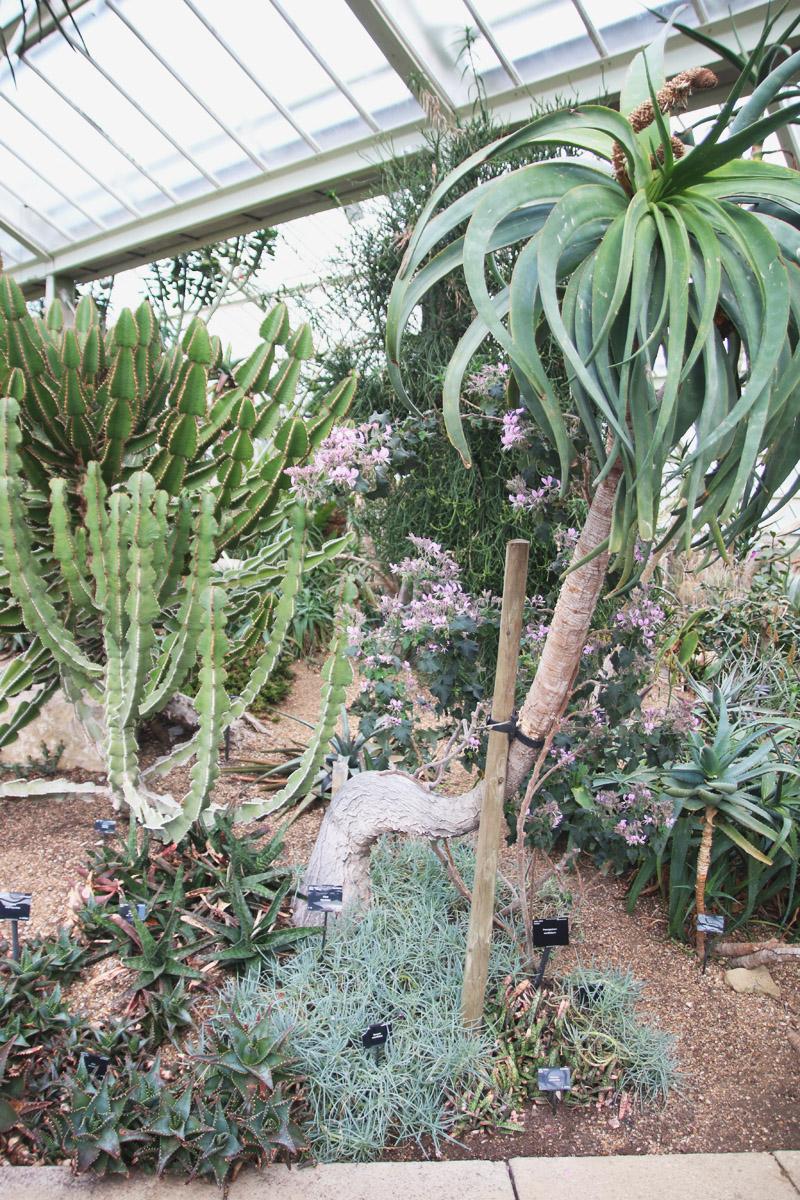 Kew Botanical Gardens, London