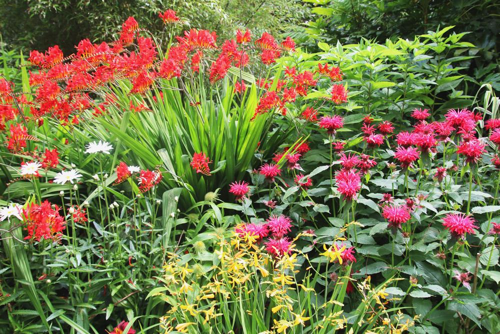 Abbotsbury Subtropical Gardens. Dorset