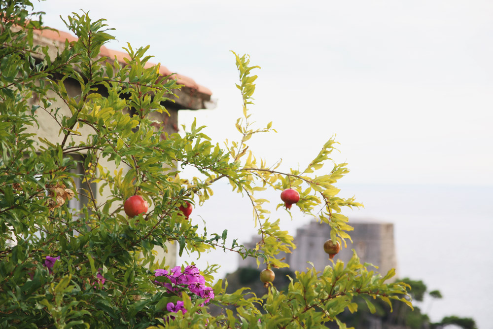 Dubrovnik Pomegranates, Croatia