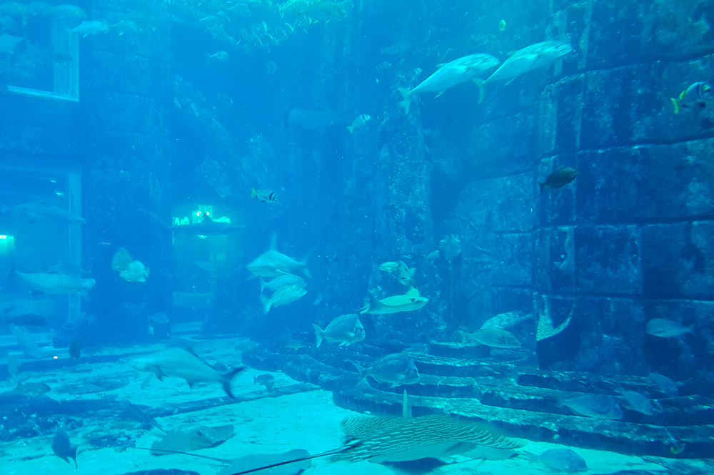The Lost Chambers Aquarium at Atlantis the Palm, Dubai