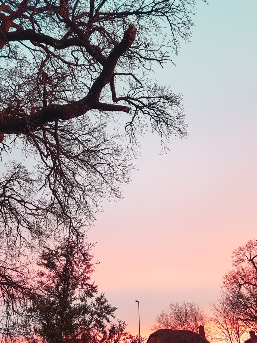 Sunrise with tree silhouette