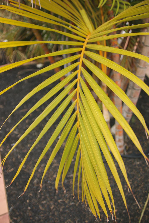 Gran Canaria Plants
