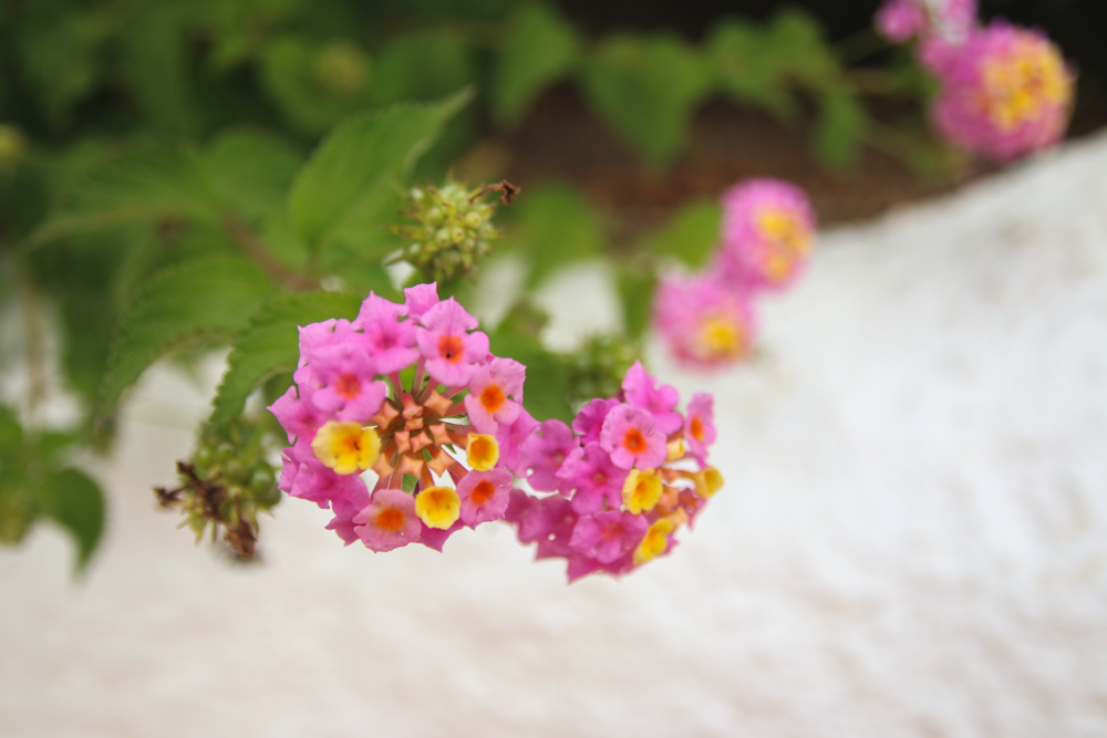 Gran Canaria Flowers