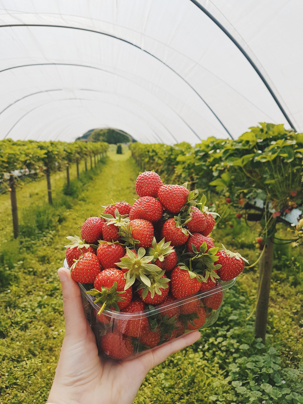 Strawberries from PYO Farm