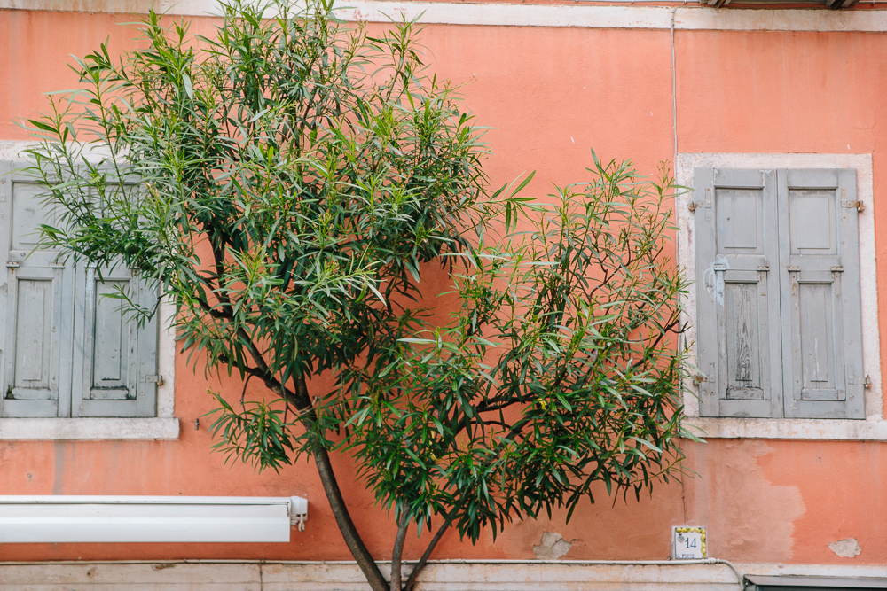 A peach wall with grey shutters and an olive tree growing between the two in Limone, Lake Garda