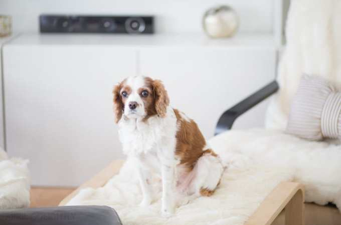 Cleaning Up Pet's Messes