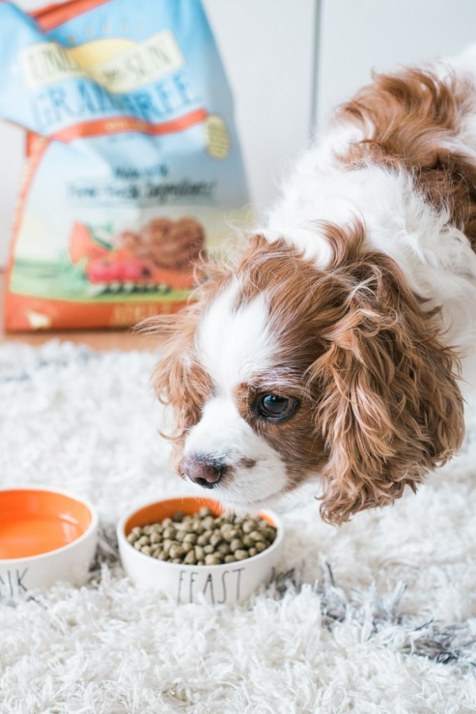 Pet Food Made By Pet People
