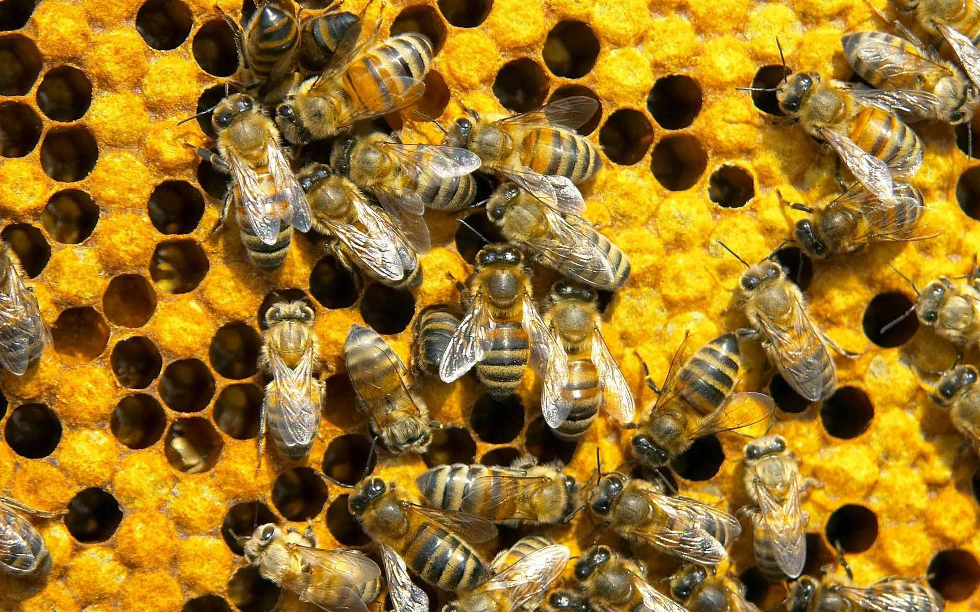 Image result for bees working