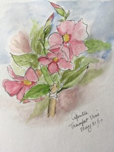 Sketch Choices - Hibiscus