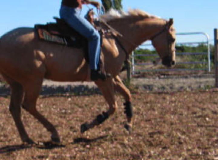 Horses need to learn balance and lateral flexion for slower gaits