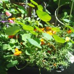 The Garden A Growing Concern