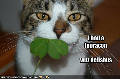 funny-pictures-your-cat-ate-a-leprechaun1
