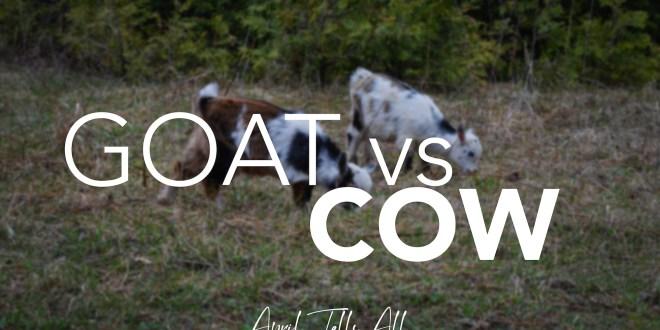 Goat vs. Cow