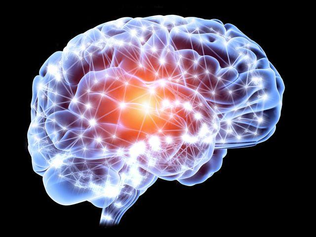 cerveau 2