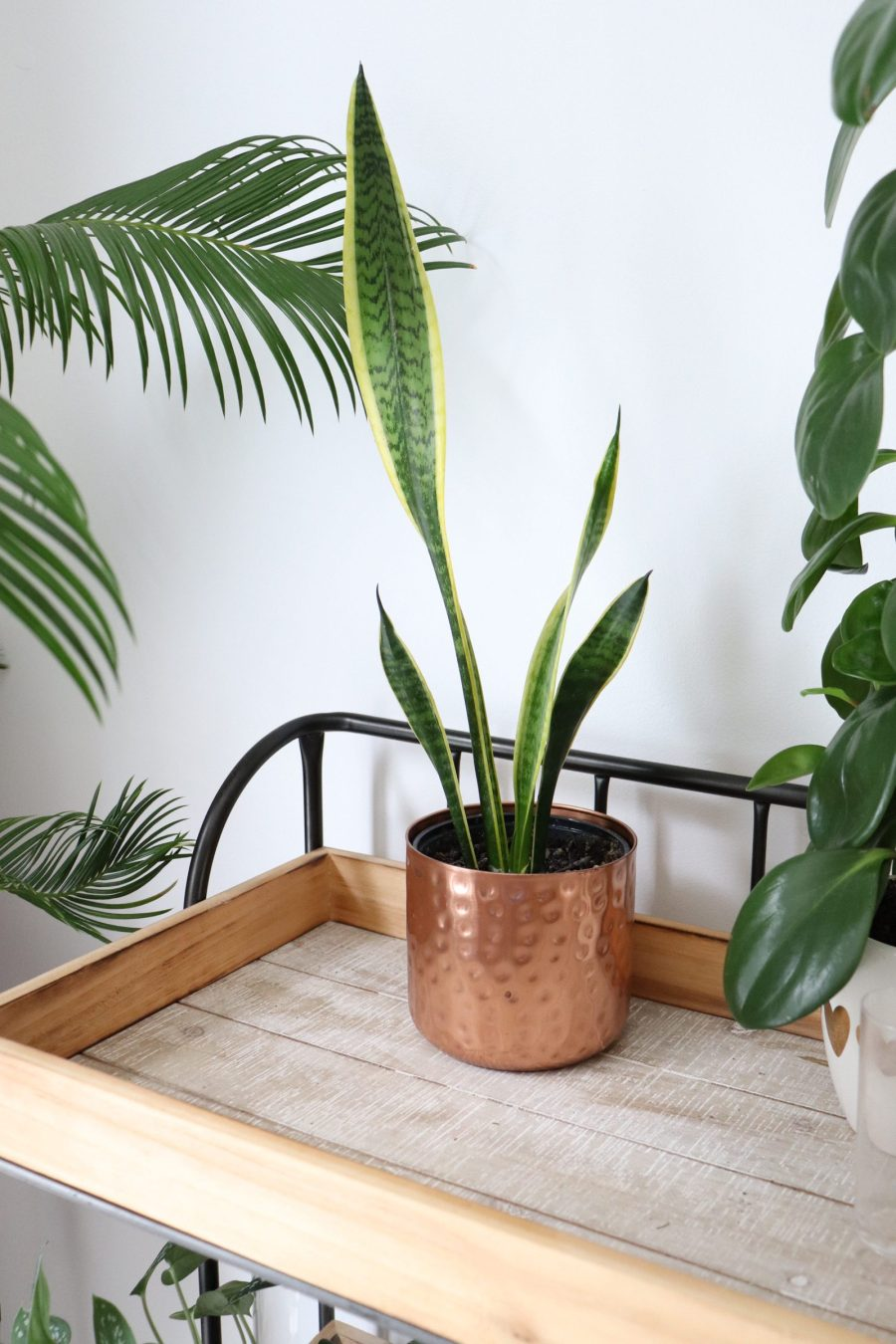 Low Maintenance Houseplants for Newbies