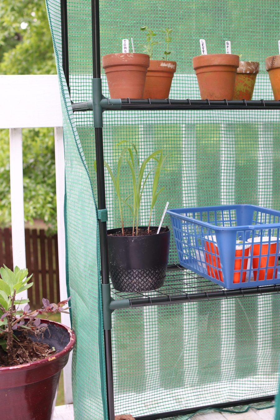 Mini Green House Gardening