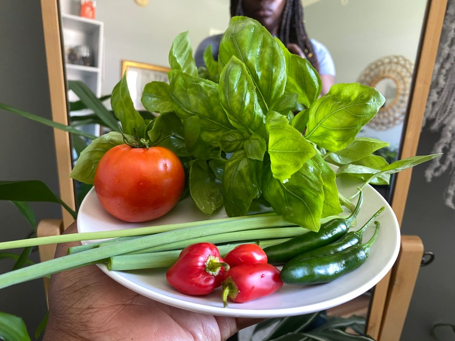 Backyard Garden Haul = Steak & Salsa Street Tacos