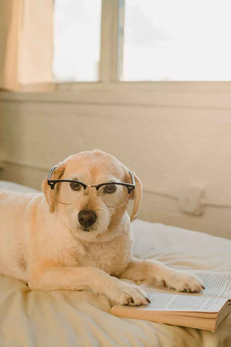 funny dog with glasses and book