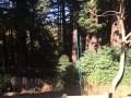 7429 Mesa - Redwood Grove