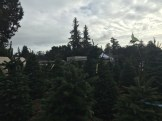 Aptos Christmas Tree Lot