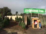 Aptos Christmas Tree Lot