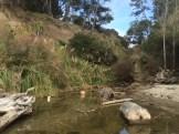 Borregas Creek Gulch