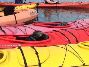 Kayaking in Elkhorn Slough
