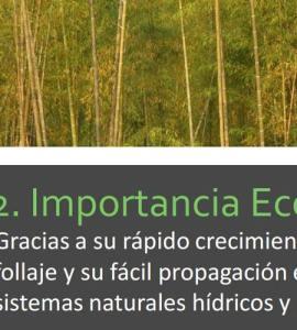 david-valdez-el-cultivo-del-bambu
