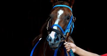 apuestas_caballos