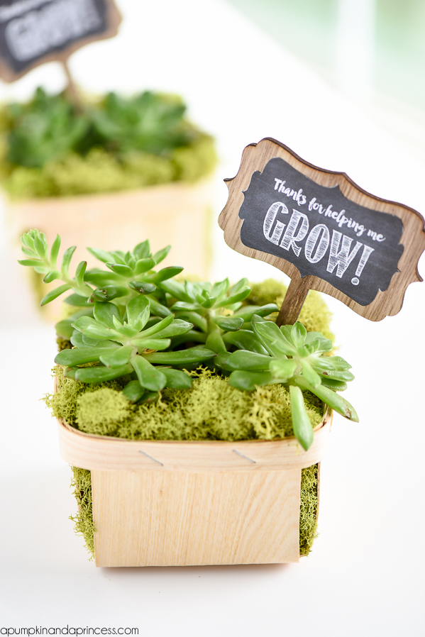 "Berry basket succulent gift - this easy DIY succulent gift makes a great Mother's Day or teacher appreciation gift. FREE printable ""Thanks for helping me grow!"" tags."