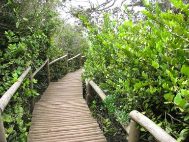 Parque Nacional Fray Jorge, Chile