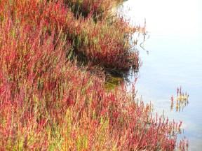 Humedal de Salinas Chicas, Chile