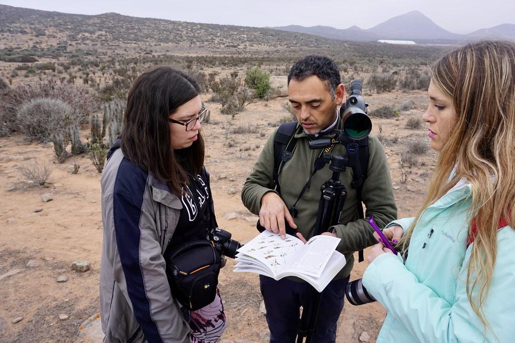 Aprendiendo de aves en Punta Teatinos. María Jesús Pérez, Rodrigo Condemarín y Fernanda Picón.