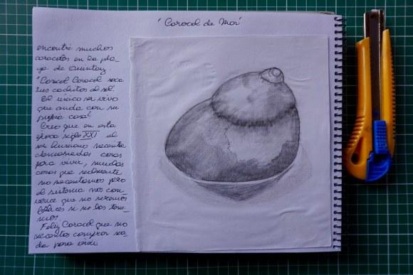 Dibujo Caracol de Mar
