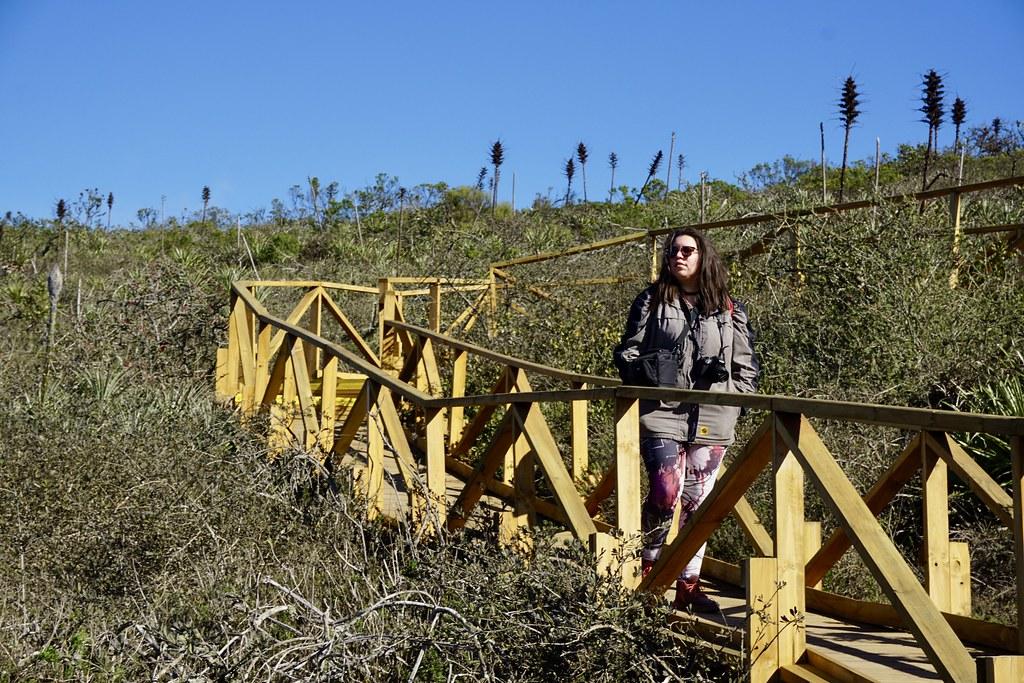Bichito Viajero en Parque Fray Jorge