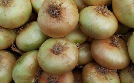 Cebolla Horcal