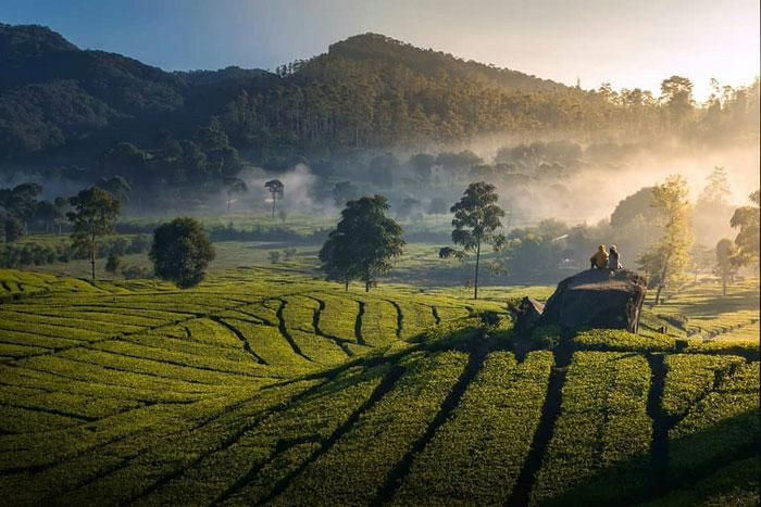 Dekat dengan Alam, Inilah 5 Wisata Pertanian yang Lagi Hits